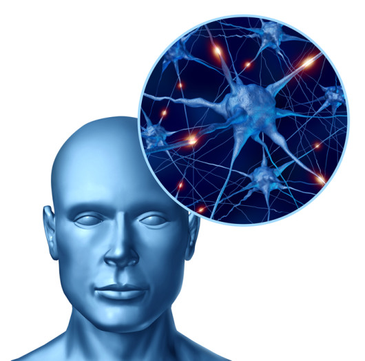 Human intelligence with active neurons
