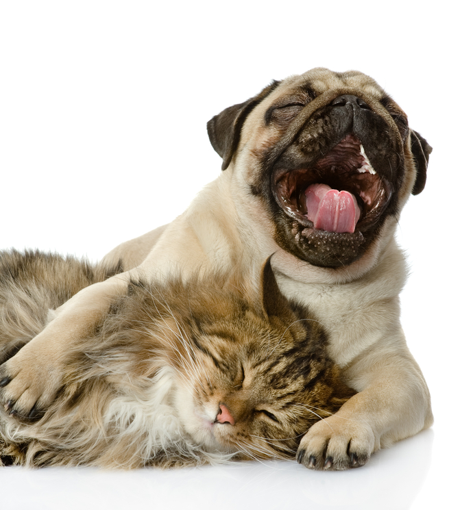 friendship dog and cat